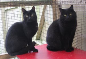 Rescue Cats Exeter